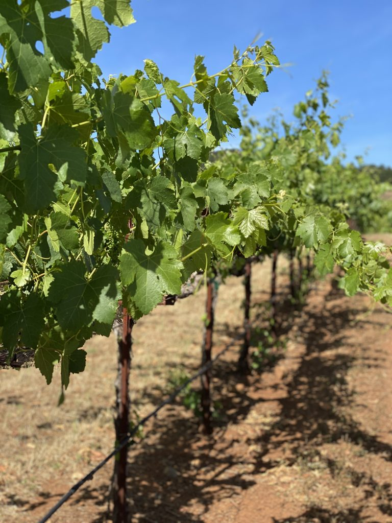 Row of vines | Wine Country Tours with Spark Experiences