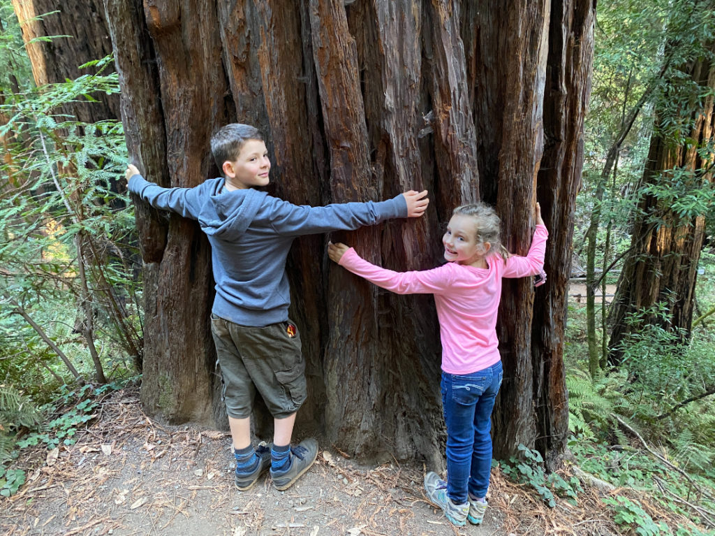 Two kids hugging a giant coastal redwood in Muir Woods near San Francisco while on a day tour with Spark Experiences